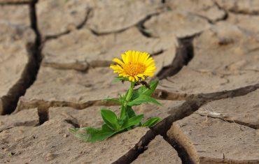 floare-rezistență